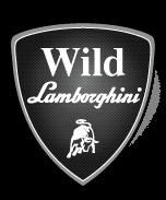 Wild Lamborghini